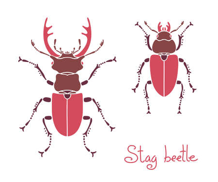 stag: Male and female stag beetle, Lucanus cervus, Stag-beetle.