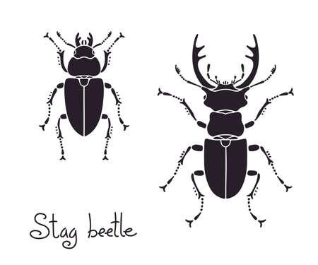 coleoptera: Male and female stag beetle, Lucanus cervus, Stag-beetle.