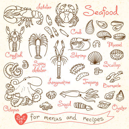 scallops: Set drawings of seafood for design menus, recipes, packaging and advertising. Shrimp, crab, mussels, squid, octopus, lobster, crayfish, lobster, scallops sea cucumbers oysters langoustine barnacle Vector illustration