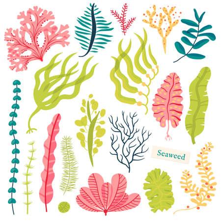 海の植物と水生の海藻。海藻セット白で隔離のベクトル図  イラスト・ベクター素材