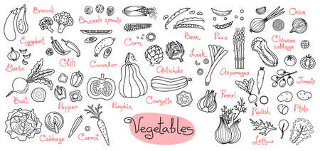 Set drawings of vegetables for design menus, recipes and packages product