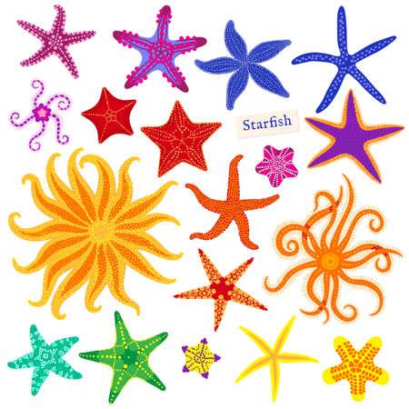 Sea stars set. Multicolored starfish on a white background. Starfishes underwater invertebrate animal. Vector illustration