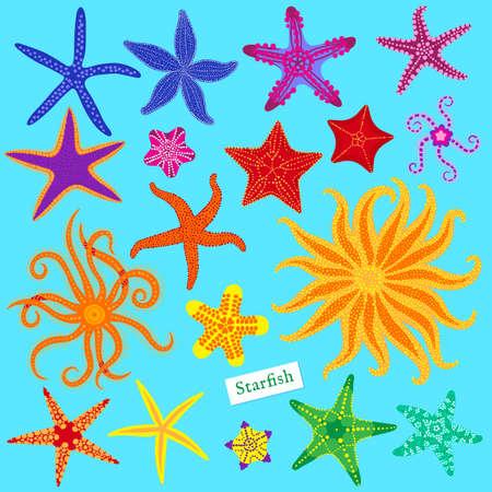 Sea stars set, Multicolored starfish, Starfishes underwater invertebrate animal.