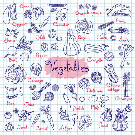 Set drawings of vegetables for design menus, recipes and packages product. Vector Illustration. Ilustracja
