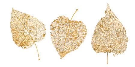 Set of golden leaves skeletons. Fallen foliage for autumn designs. Natural leaf of aspen and birch. Vector illustration. Illustration