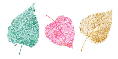 Ensemble de feuilles de squelettes. Feuillage tombé pour les dessins d'automne. Feuille naturelle de tremble et de bouleau. Illustration vectorielle colorée.