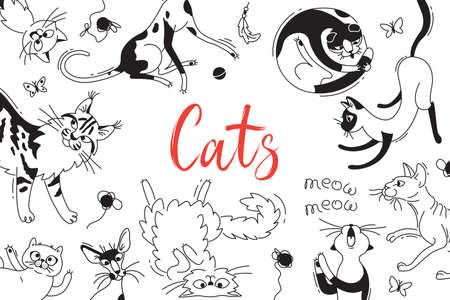 Card with playing cats of different breeds. Cat in the style doodle cartoon. Vector background.