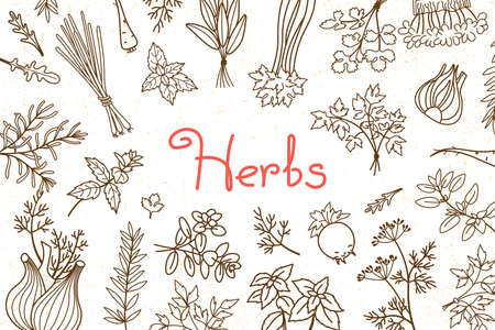 Background with various herbs used in cooking and inscription for the design of menus, recipes and packaging products. Vector illustration.