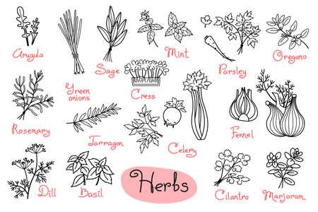 Zestaw rysunków ziół stosowanych w gotowaniu do projektowania menu, przepisów i opakowań produktów. Ilustracja wektorowa.