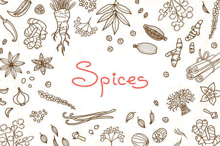 Background with various spices used in cooking and inscription for the design of menus, recipes and packaging products. Vector illustration. Illustration
