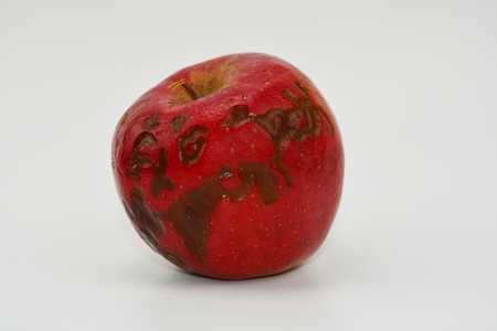 vermin: Damaged apple. Red apple with parasite on white background