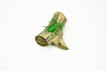 breen: A green plastic grasshoper on a log