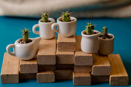 Small home ornamental cactuses in the cute ceramic cups on wooden planks. Composition of mini gardens of prickly succulents on the blue background. Plants stand on a pyramid staircase of wood.