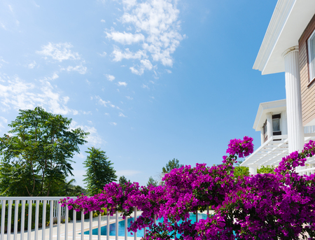 Summer vacation at the Villa. Beautiful flowering tree in the yard on a clear day Stock Photo