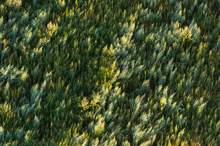Field of wormwood in the rays of the setting sun Reklamní fotografie