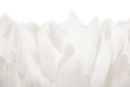 Close-up of white goose feathers isolated on white background Reklamní fotografie