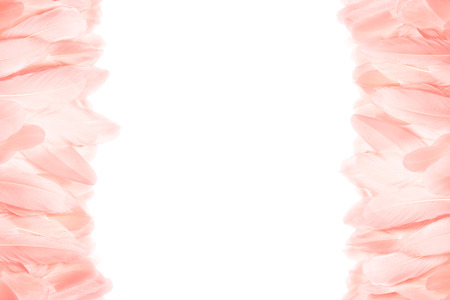 Close-up of pink feathers on the left and right side of the photo. Horizontal frame. Isolated on white background