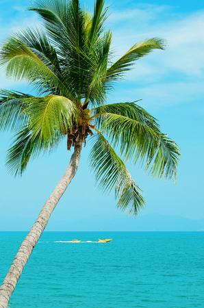 Vakantie aan zee. Het turquoise water en de palmboom op de blauwe hemelachtergrond. Boot en plezier