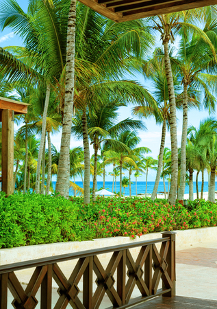 The view from the terrace of the hotel in a tropical Paradise. Palm trees, flowers, beach and ocean. Sea tour Reklamní fotografie