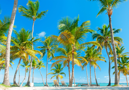 Beach holiday. Palm trees against the blue sky. The sunbeds on the sand. Summer vacation Reklamní fotografie