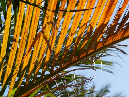 pinnately: Green and yellow palm tree leaves pattern Stock Photo