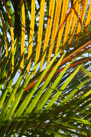 Green and yellow palm tree leaves pattern photo