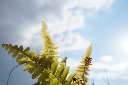 Green fern on the blue sky background, selective focus photo