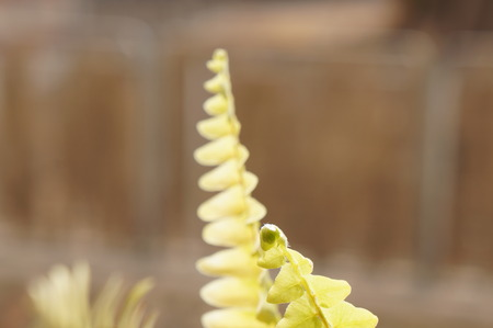 Green fern, selective focus photo