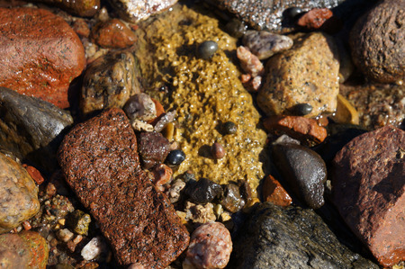 Wet stones and snails near the sea photo