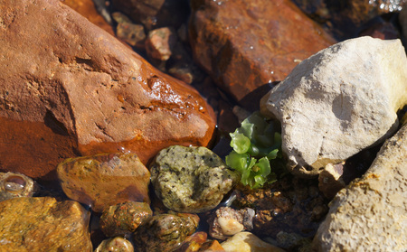 Clear sea water, algae and stones on the floor, low-tide time photo