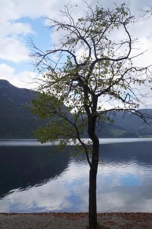 bohinj: Bohinj lake, autumn, Slovenia