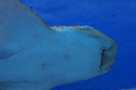 Face of the big shark photo