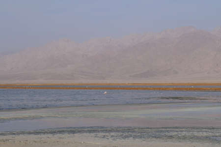 Salt lake with birds near Eilat, Israel, twilight time, low light photo