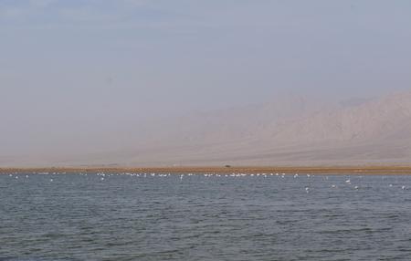 desalination: Salt lake with birds near Eilat, Israel, twilight time, low light