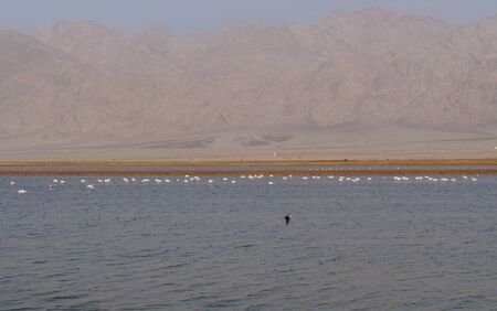 morass: Salt lake with birds near Eilat, Israel, twilight time, low light