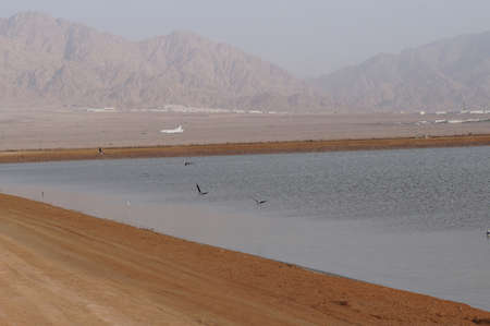 desalination: Salt lake with birds near Eilat, Israel, twilight time, low light