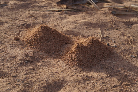 pismire: Anthills in the prairie