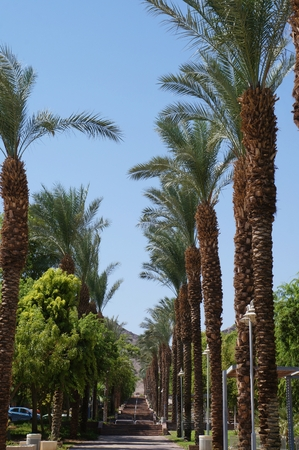 eilat: Alley in Eilat, Israel