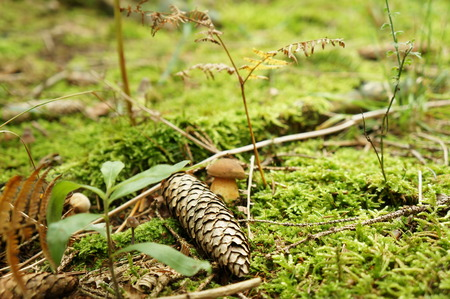 purposely: Close-up view of cone and mushroom on the ground in the forest, purposely blurred Stock Photo