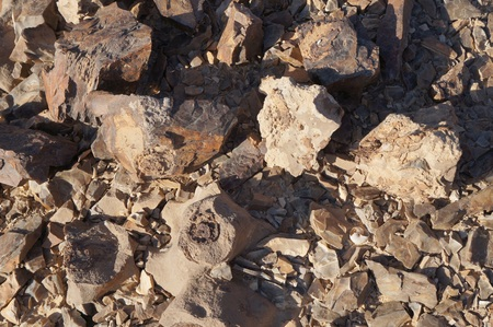 petrified: Pieces of petrified wood in the desert