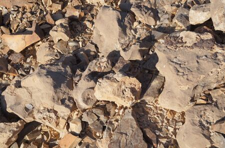 petrified fossil: Pieces of petrified wood in the desert