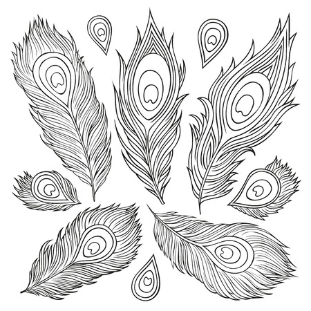 pluma de pavo real: Plumas decorativas vector étnica de la vendimia abstracta. Dibujado a mano ilustración.