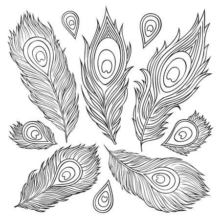pluma de pavo real: Plumas decorativas vector �tnica de la vendimia abstracta. Dibujado a mano ilustraci�n.