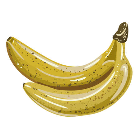 vector illustration of bananas. isolated yellow fruit. picturesque and delicious objects for design.