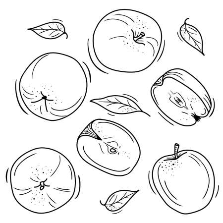 vector illustration of apples in Doodle style. contour drawing of an Apple. minimalistic fruit design.