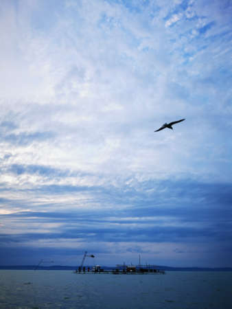 A large seagull flying through a cloudy blue sky
