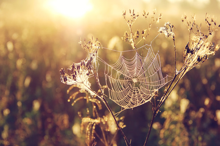 spider web on blurred Golden background with bokeh at dawn Stock Photo