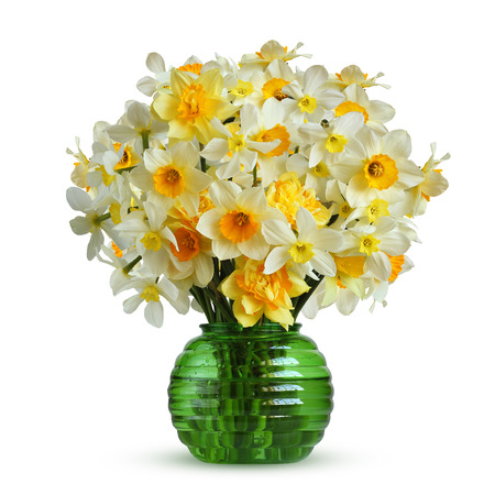 Narcissus isolated on a white background. Bouquet of garden daffodils of different varieties in a glass vase.