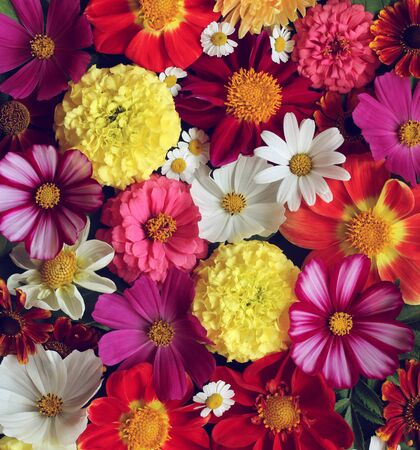 floral background, top view. garden flowers. flat lay. bright natural backdrop.