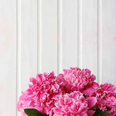 bouquet of pink garden peonies close-up on a light background. space for text.